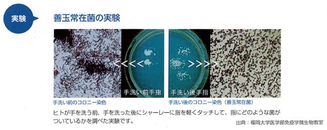 実験 善玉常在菌の実験